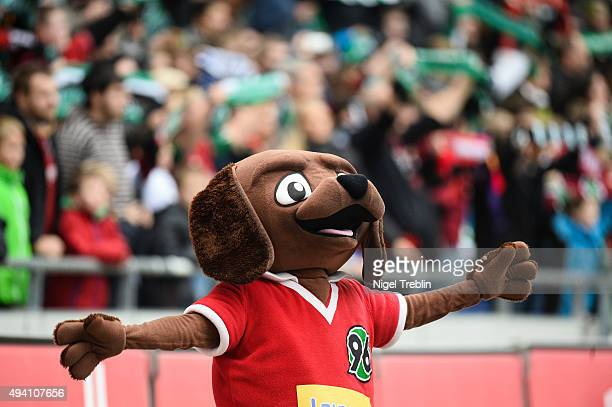Mascot Eddi of Hannover is pictured prior to the Bundesliga match between Hannover 96 and Eintracht Frankfurt at HDI-Arena on October 24, 2015 in...