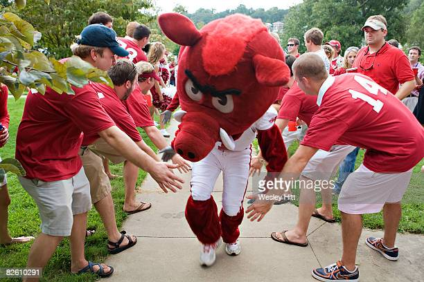 Mascot of the Arkansas Razorbacks works the crowd before a game against the Western Illinois Leathernecks at Donald W Reynolds Stadium on August 30...