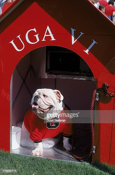 Mascot of the Georgia Bulldogs, looks on from his dog house during a game against the Louisiana State Tigers at Stanford Stadium on October 2, 1999...
