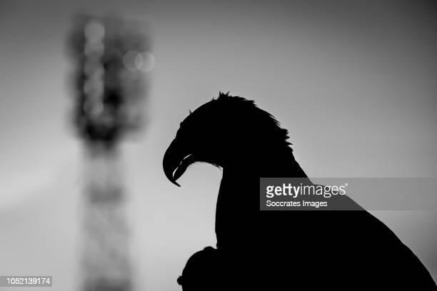 mascotte of Go Ahead Eagles Marley during the Dutch Keuken Kampioen Divisie match between Go Ahead Eagles v Roda JC at the De Adelaarshorst on...