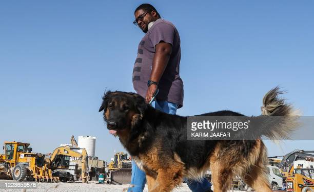 Mask-clad employee of the Paws animal welfare organisation walks a rescued stray dog outside the premises in the Mesaieed industrial area, about 50...