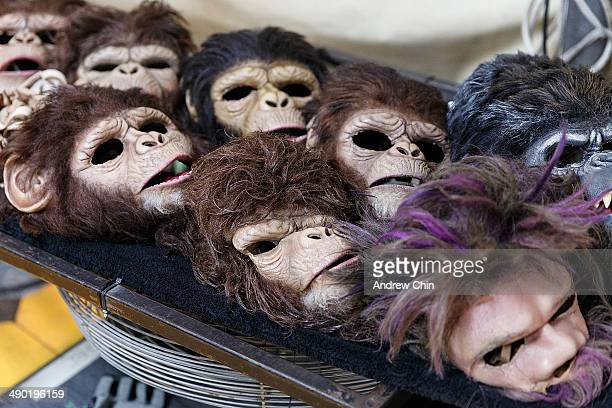Masks are drying for Cirque Du Soleil's new production TOTEM on May 13 2014 in Vancouver Canada