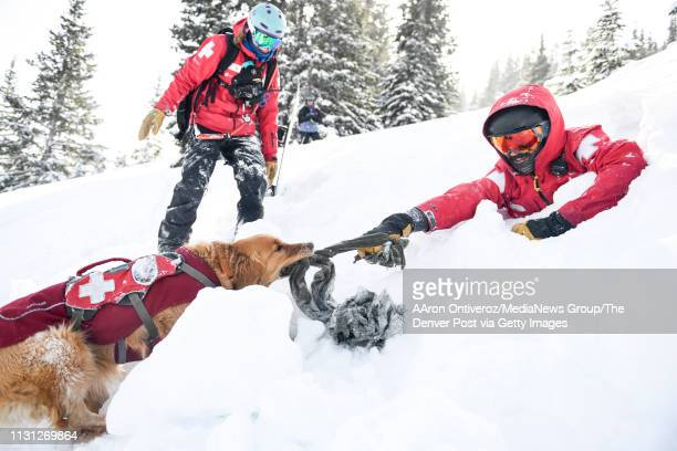 Mason pulls on a tug held by ski patroller Matt Urich as handler Abby Seymour looks on during a training at Copper Mountain on Wednesday February 20...
