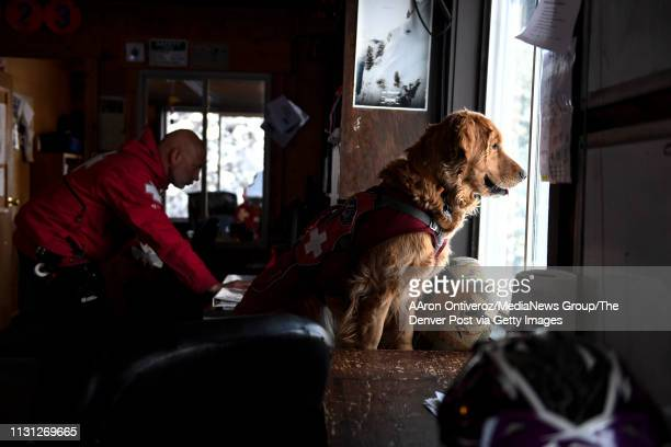 Mason watches as Abby Seymour leaves the patrol lodge to do rounds at Copper Mountain on Wednesday February 20 2019 Mason is a fouryearold avalanche...