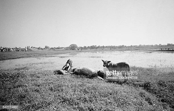 Mass grave containing the bodies of Bengali intellectuals in a clay pit near Dhaka during the war for Bangladeshi independence | Location Near Dhaka...