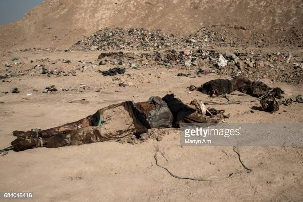 A mass grave in Hammam alAli in northern Iraq Over a hundred bodies were found decapitated by the Iraqi Army as they advanced towards Mosul Islamic...