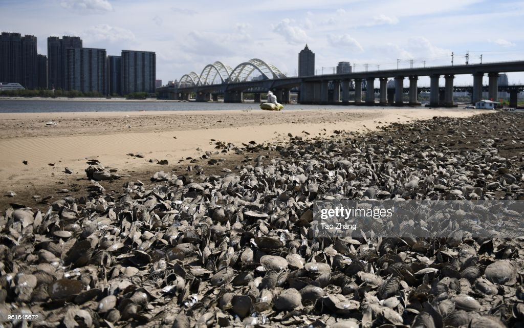 Drought Severely Affects Songhuajiang River Of China