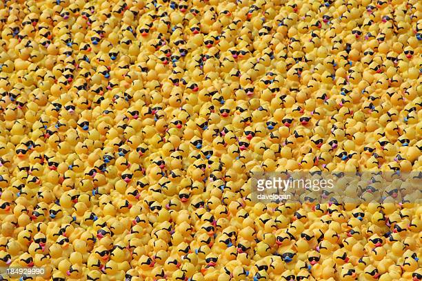 Ensemble de canards en caoutchouc