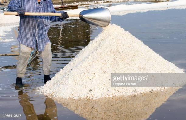 mass of salt in the salt sea salt farm - ソルトポンド ストックフォトと画像