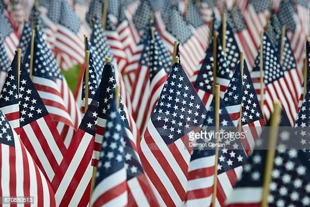 Massachusetts, Boston, American flags on Boston Common