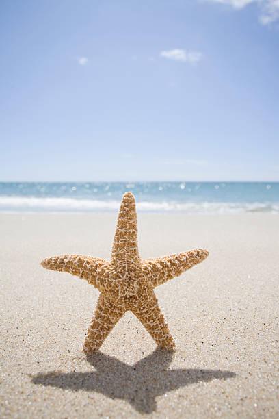 USA, Massachusetts, Cape Cod, Nantucket, close up of starfish on sand