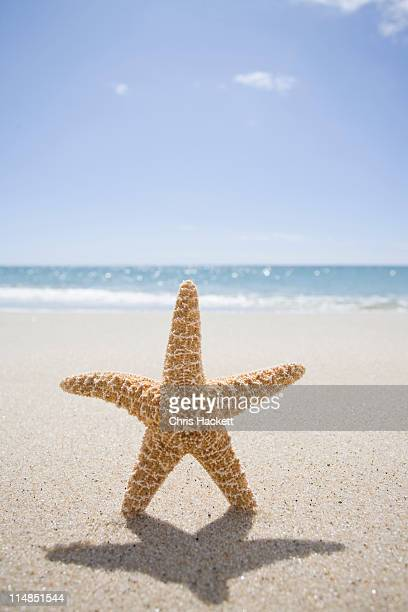 usa, massachusetts, cape cod, nantucket, close up of starfish on sand - hackett stock photos and pictures