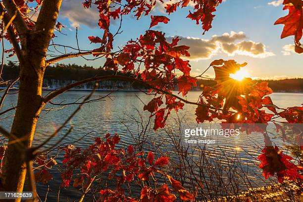 usa, massachusetts, concord, walden pond, autumn leaves - walden pond stock pictures, royalty-free photos & images
