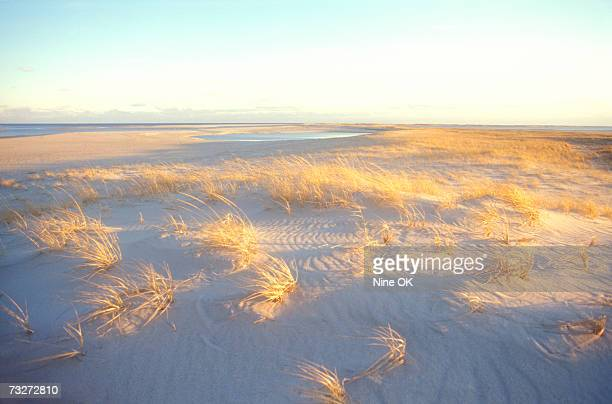 'USA, Massachusetts, grass and sand dunes on north Atlantic coast'