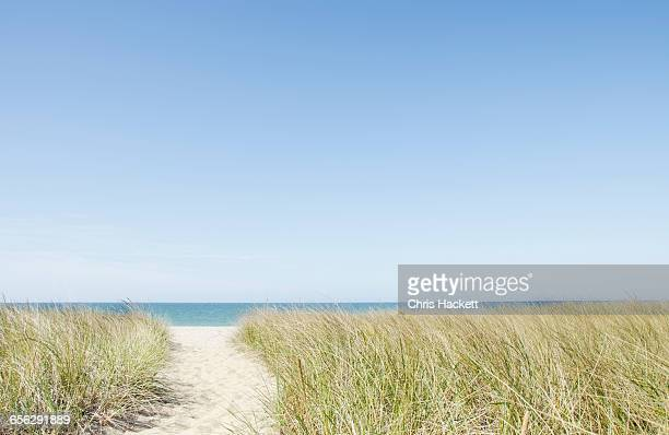 usa, massachusetts, nantucket, footpath leading to sandy beach - nantucket stock pictures, royalty-free photos & images