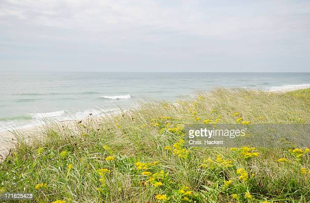 usa, massachusetts, nantucket island, view of sandy beach - goldenrod stock pictures, royalty-free photos & images