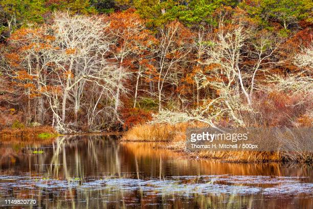 massachusetts-cape cod-barnstable-mill pond - brook mitchell stock pictures, royalty-free photos & images