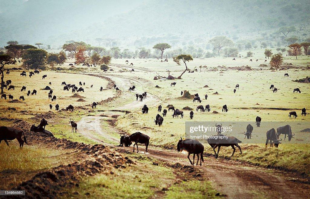 Animals at Massai Mara National Park.