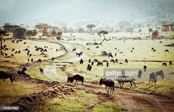 Massai Mara National Park