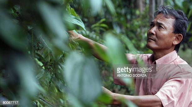 STORY Massao Ozaki a Japanese descendent checks his African oil palm plantation on February 28 2008 in the outskirts of Tailandia Para northern...