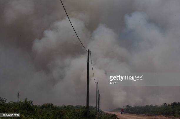 Massive fire engulfs former peatland forest converted into palm oil plantation in Aceh Jaya district in Indonesia's Aceh province on February 16 2014...
