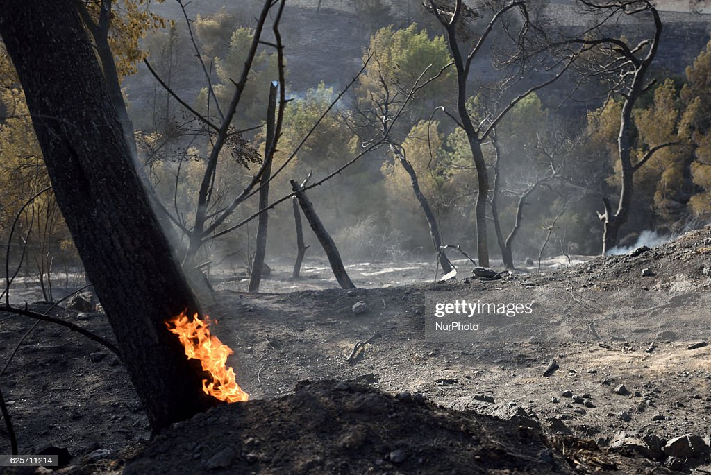 Massive forest fire in The Northern city of Haifa, Israel on November 25, 2016. The massive fire in the city of Haifa lead to the evacuation of dozens of thousands of city residents and is part of a lrage wave of forest fires errupted all over Israel during the last days.