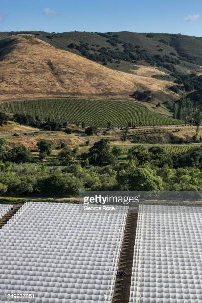 A massive legal marijuana growing operation utilizing popup hoop nursery construction technology takes over an entire valley along the Santa Ynez...
