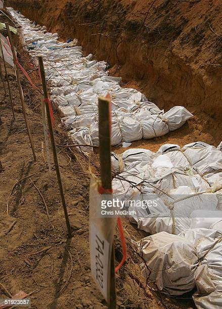 A massive line of corpses sit waiting to be buried at a mass burial site in Bang Ma Roan Temple January 7 2005 in Takua Pa Thailand Thailand's...
