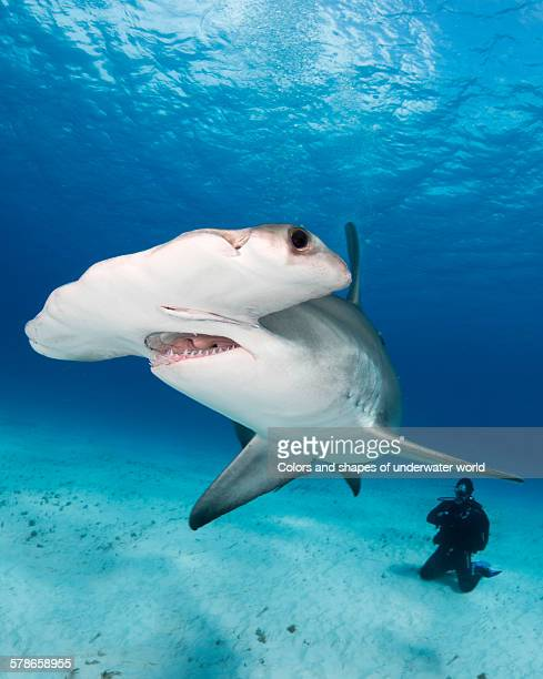 massive - south bimini stock photos and pictures