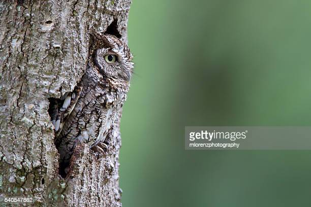 master of disguise - camouflage stock pictures, royalty-free photos & images