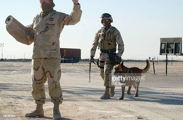 MasteratArms 2nd Class Phillip Darity a US Navy dog handler instructs a role player acting as a suspect for the training of his dog Argo Argo who is...