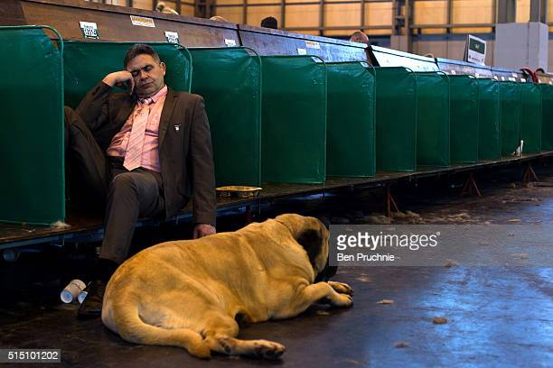 A mastiff sleeps next to its owner on the third day of Crufts 2016 on March 12 2016 in Birmingham England First held in 1891 Crufts is said to be the...
