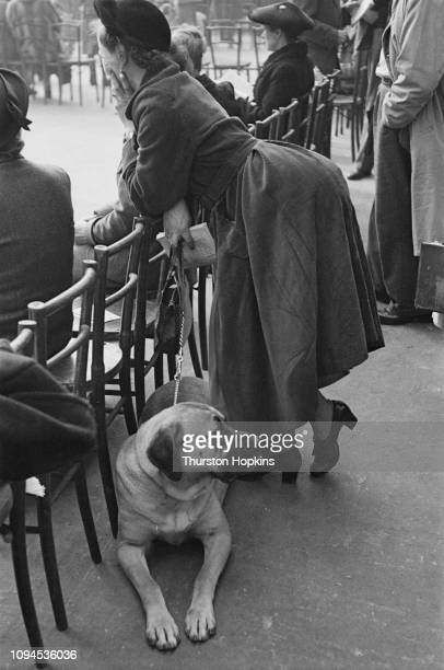 A mastiff type dog and its owner at Crufts dog show held at the Grand Hall Olympia London 8th9th February 1952 Original Publication Picture Post Dog...