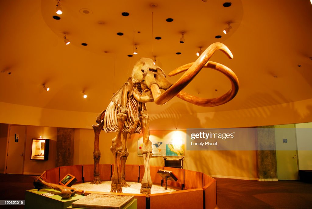 Mastodon Skeleton George C Page Museum At La Brea Tar Pits ...