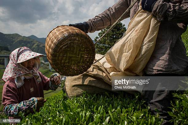 Masumi Moriuchi collects baskets of freshly picked tea leaves from workers on her farm on May 1, 2014 in Shizuoka, Japan. Japan produces aproximately...