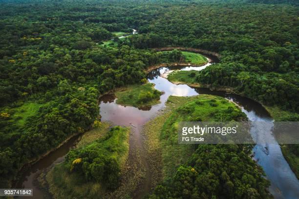mata atlántica - bosque atlántico en brasil - río amazonas fotografías e imágenes de stock