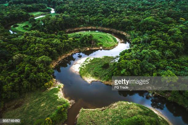 mata atlantica - atlantic forest in brazil - manaus stock pictures, royalty-free photos & images