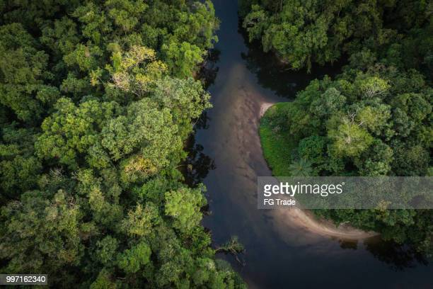 mata atlantica - atlantische regenwald in brasilien - mata atlantica stock-fotos und bilder