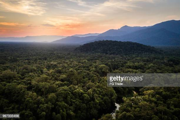 mata atlantica - atlantic forest in brazil - goias stock pictures, royalty-free photos & images