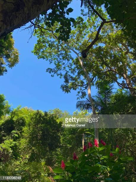 "mata atlantica rainforest in foz do iguacu - ""markus daniel"" stock pictures, royalty-free photos & images"