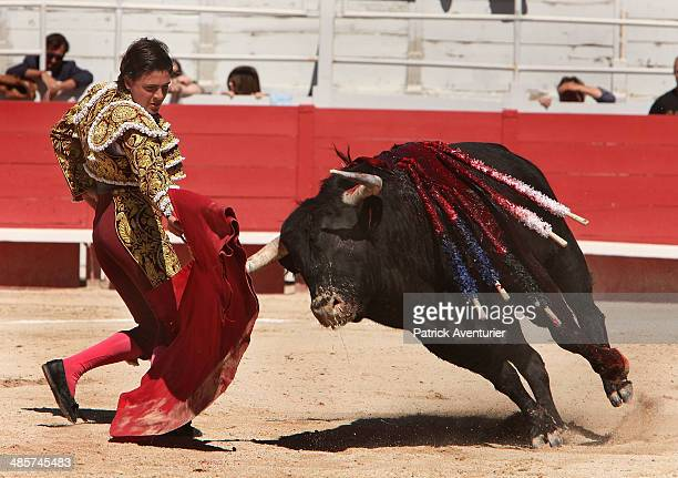 Matador Michel Lagravere aka 'Michelito' fights for the first time in Europe at the Feria D'Arles on April 19 2014 in Arles France The FrancoMexican...