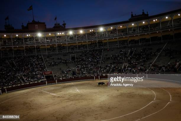 A matador performs a pass on a bull during the bullfight at Las Ventas bullring in in Madrid Spain on September 10 2017