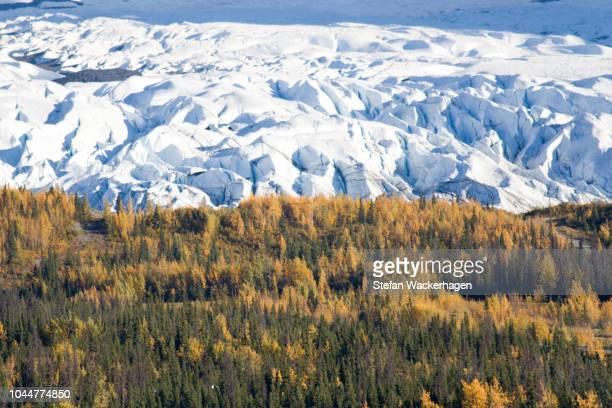 matanuska glacier, fall colors, chugach mountains, alaska, usa - chugach state park stock pictures, royalty-free photos & images