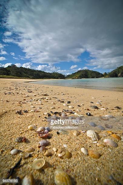 matapouri beach - whangarei heads stock pictures, royalty-free photos & images