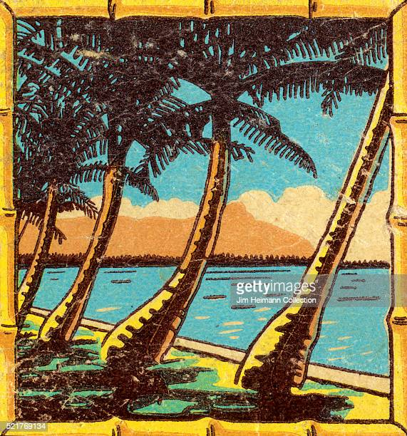 Matchbook image of palm trees stretched out over balmy waters