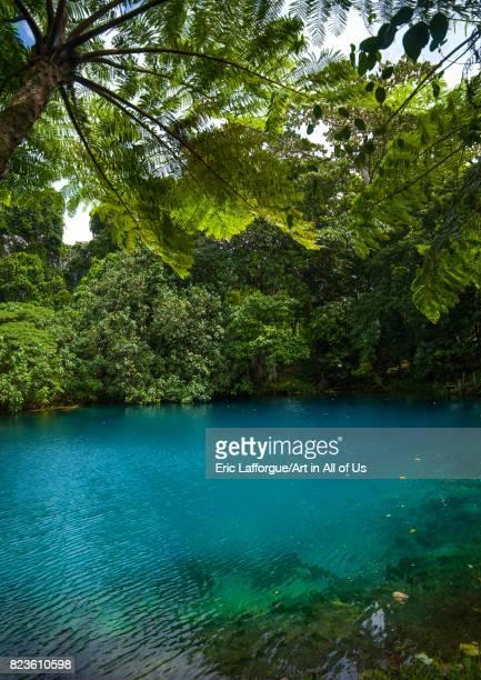 Matevulu blue hole Sanma Province Espiritu Santo Vanuatu on September 2 2007 in Espiritu Santo Vanuatu