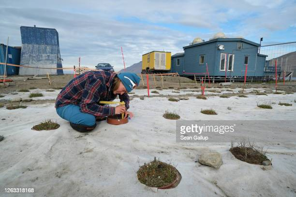 Mathilde Le Moullec a researcher at the Norwegian University of Science and Technology measures stalks of arctic bluegrass as part of a study to...
