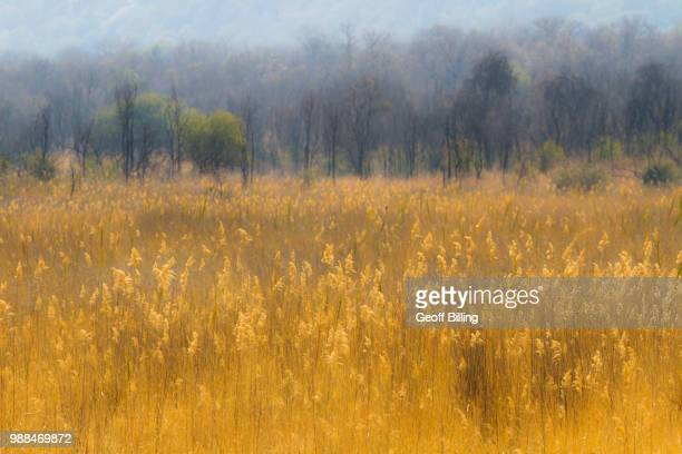 matobo national park - kenora stock pictures, royalty-free photos & images