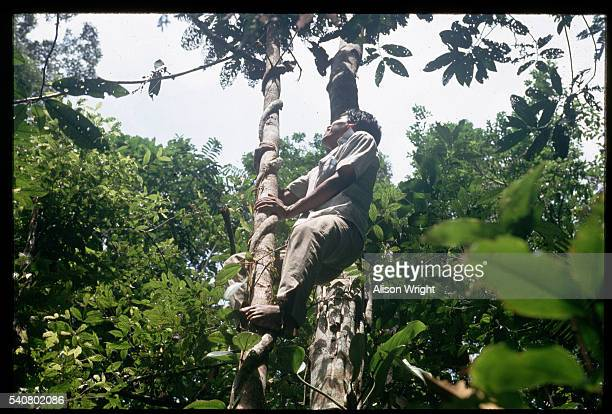 Matses Indian Climbing a Rainforest Vine