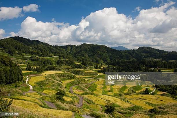 Matsudai terraced rice paddy, Niigata Prefecture, Honshu, Japan